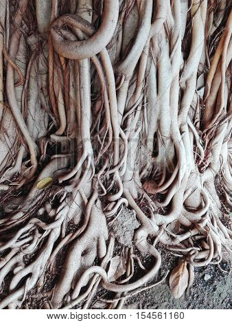 The Root Of The Tree