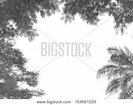 Black Branches Gradient On White