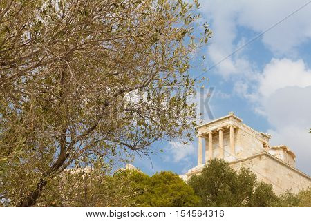The Acropolis of Athens in Greece behind an olive tree photographed from a low perspective