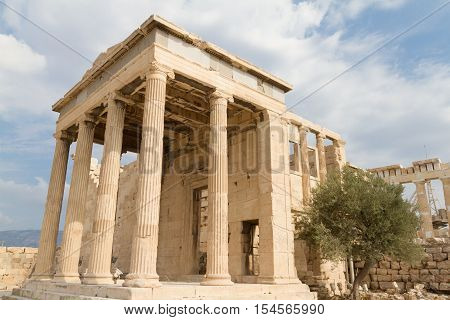 Temple and Olive Tree at the Acropolis of Athens in Greece
