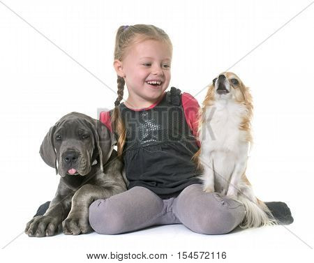 puppy great dane and child in front of white background