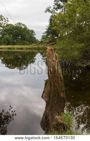 Cut tree trunk in a pond in the countryside of Ambleside in Cumbria UK