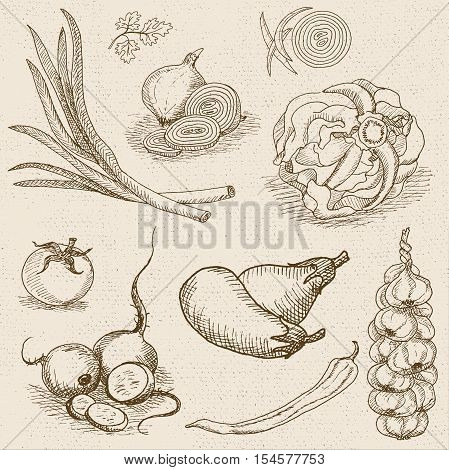Set of chalk sketch hand drawn, in sketch style, food and spices, old paper textured background. Eggplant, onions, cabbage, garlic, tomato, pepper, radish, turnip, beets.