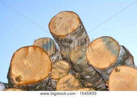 Piled Timber