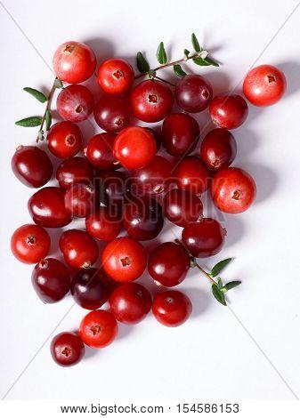 Wild Cranberries On Plain White Backdrop, Top View
