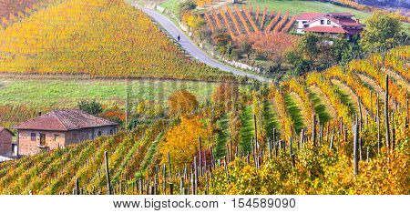 Autumn landscape. Golden vineyards of Piemonte. Italy