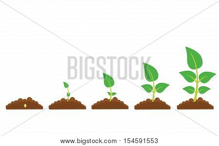 Set of illustrations with phases plant growth. Phases of greenery germination and cultivation. New life and organic concept.