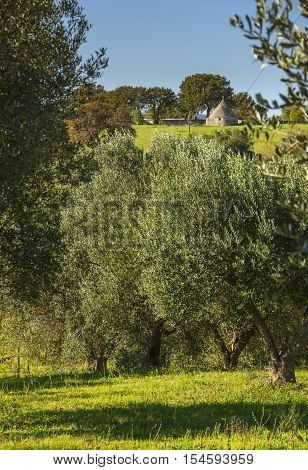 Italy landscape: Apulia countryside. Valle d'Itria. hills with olive trees and Trullo. Typical example of rural Apulian landscape.