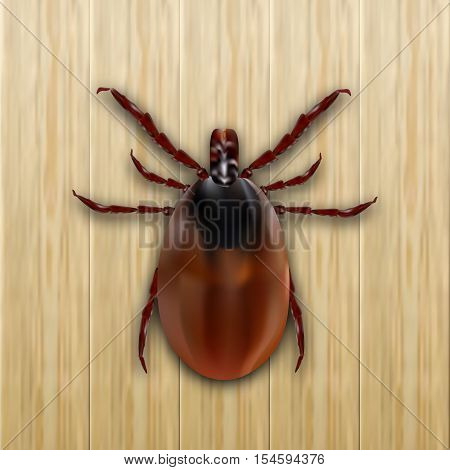 Red mite. Mite allergy. Epidemic. Mite parasites. On a wooden background. Vector illustration