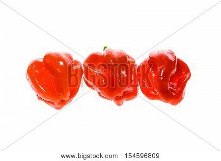 Fresh Ripe Caribbean Red Habanero Hot Chili Pepper