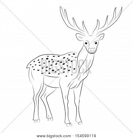 Hand Drawn Spotted Reindeer. Sketch Cute Deer Isolated on White.Vector Illustration.