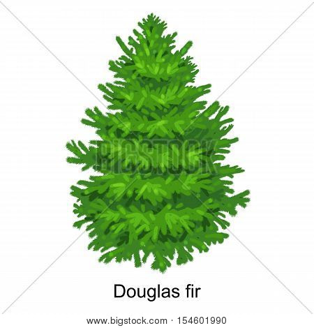 Christmas vector tree like douglas fir for New year celebration without holiday decoration, evergreen xmas plants.
