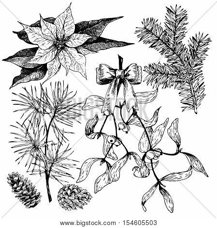 VEctor hand drawn fir pine poinsettia mistetoe and pinecones. Vintage engraved winter plant. Botanical illustration. Christmas decoration. Monocrome illustration. Use for Xmas holiday decorating.