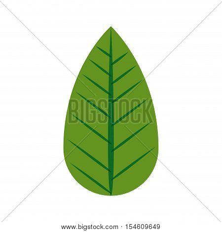 silhouette green leaf with ramifications vector illustration