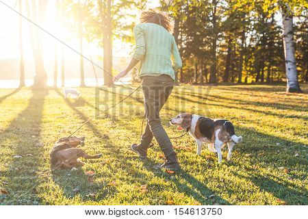 Adult Woman Walking The Dogs At Park