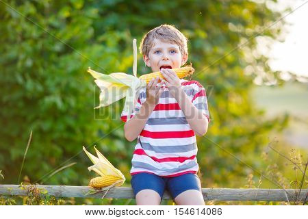 Happy preschool kid boy with glasses holding ears of corn on farm in field, outdoors. Funny child hild having fun with farming and gardening of vegetable. Harvest, Thanksgiving Day.