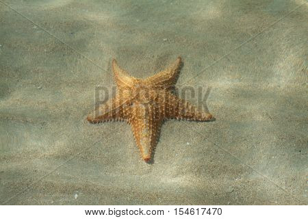 Starfish beach on Bocas del toro has a lot of Starfishes, Panama