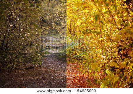 Photo before and after the image editing process. Pathway with fallen orange leaves through the colourful autumn forest