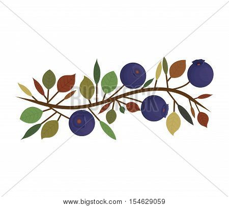 branch with purple natural blueberries vector illustration