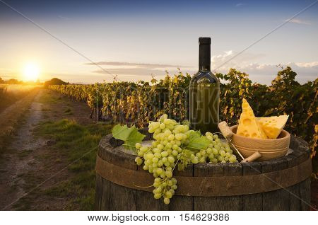 White wine with barrel on vineyard in Chianti, Tuscany, Italy.