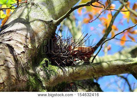 Soft focused fall scene with bird nest on chestnut tree.