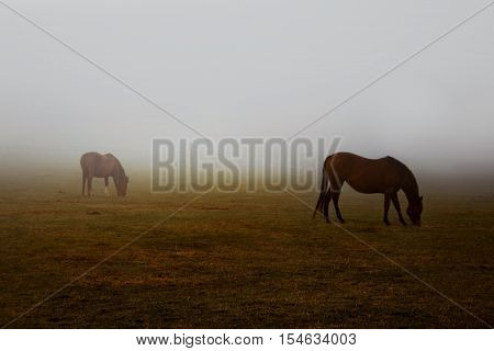 Wild brown horses grazing pastures with hazy weather