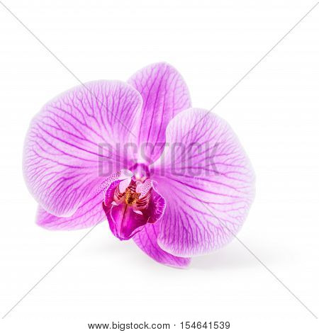 Pink orchid flower. Flower head. Single object isolated on white background clipping path included