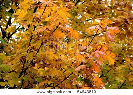 close up of leaves in aurumn colors