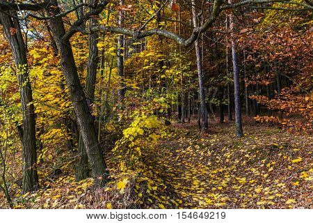 Forest path and colored leaves on trees. Colorful autumn and Moravian landscape Dva dvory.