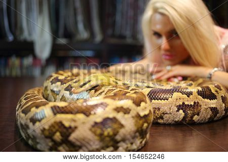 Pretty woman touches big snake on wooden table indoor, focus on snake head