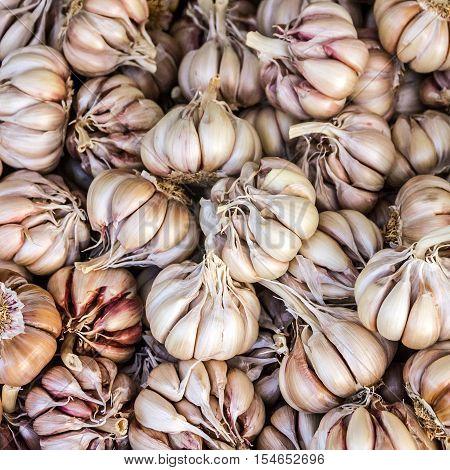 Garlic heads, vegetarian vegetable healthy food background