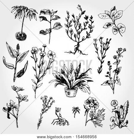 Plants Hand Drawn