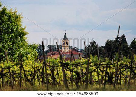 a blurred vineyard in an Italian Village in Piedmont