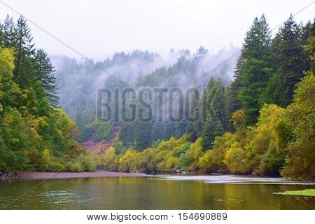 Deciduous trees changing colors amongst a Pine and Redwood Forest taken at the Russian River, CA during autumn
