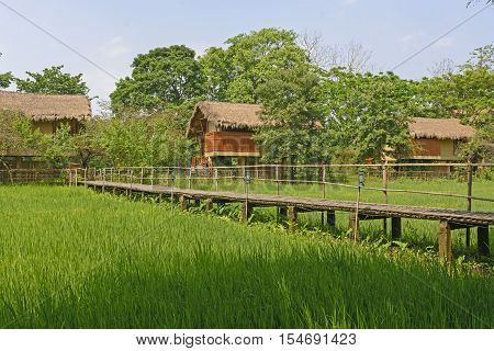 Bamboo Bridge across a Rice Paddy in a Tourist Lodge in Assam India