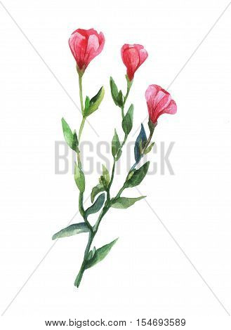 Red Lein, flowering flax, red flax, scarlet flax, crimson flax(Linum grandiflorum). Watercolor illustration on white background.