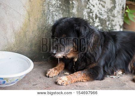 Lonely black dog with sad eyes and sick is laying and waiting for someone outdoors