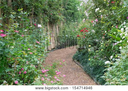 Walkway in botanic rose garden stock photo