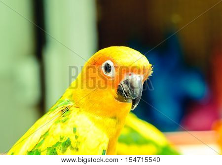 Yellow-green Parrot