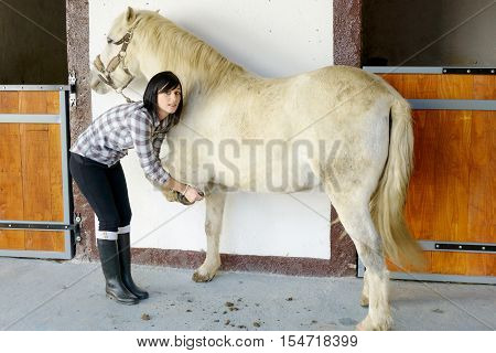 beautiful brunette young woman cleans the horse's hooves