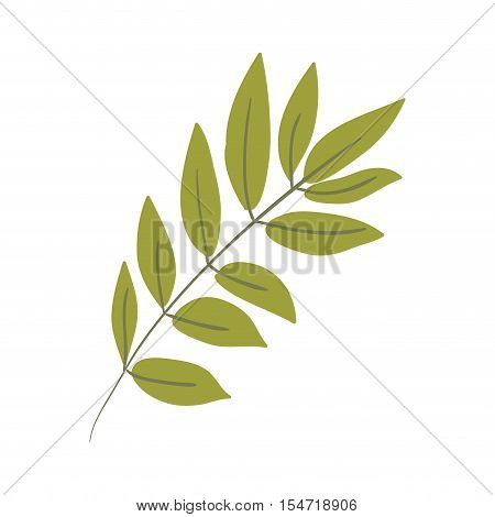 Silhouette oval leaves with ramifications vector illustration