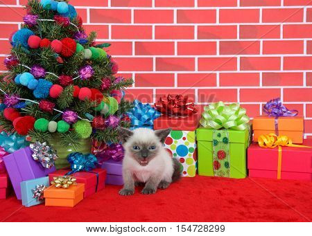 Tiny Siamese kitten with munchkin characteristics looking at viewer sitting on red fur carpet by christmas tree decorated with yarn balls and lights with presents around her brick wall background