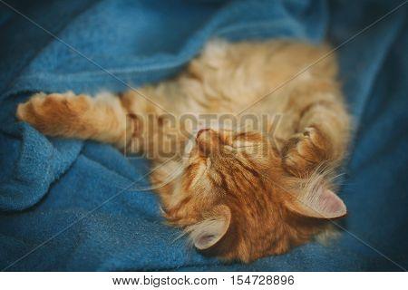 red kitten sleep lying on blue fleece blanket selective focus