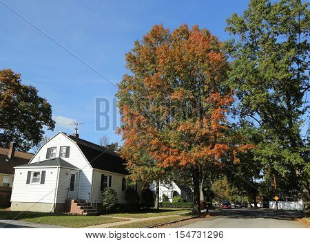 Indian summer in Long Island, New York