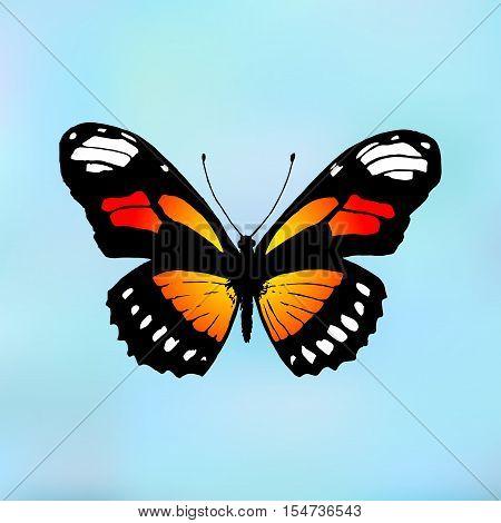Vector butterfly Monarch. Butterfly Danaus plexippus on blue background