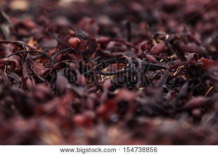Surface of red seaweed closeup. Alga background.