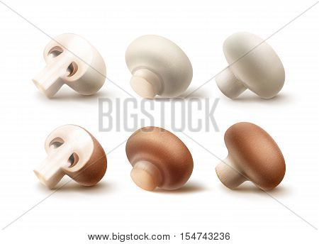 Vector Set of Fresh Whole and Sliced Half Brown White Portabello Agaricus  Champignons Mushrooms Close up Isolated on White Background