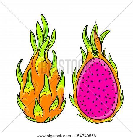 vector dragon fruit. Isolated editable objects. pitaya exotic fruit.