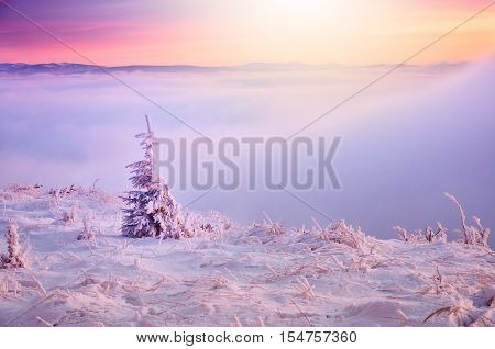 Winter christmas tree over covered by snow on the top of the hill with dreamy misty background during cold colorful morning