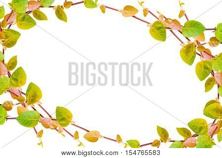 the green creeper plant frame isolated on white background